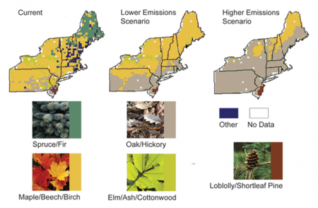 Projected Shifts in Trees Species