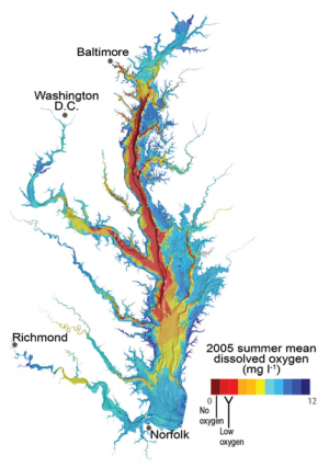 Dead Zones in the Chesapeake Bay