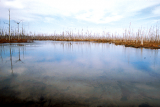 "A ""ghost swamp"" in south Louisiana shows the effects of saltwater intrusion."