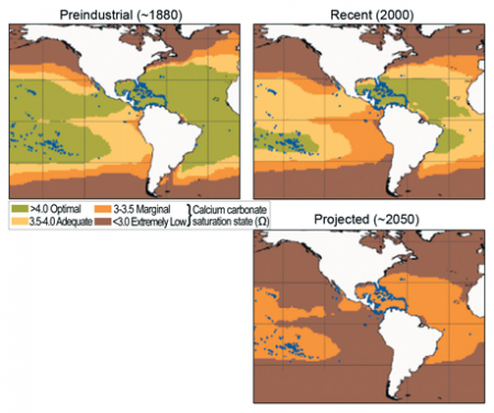 Calcium Carbonate Saturation in Ocean Surface Waters
