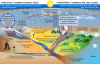 Projected Changes in the Water Cycle