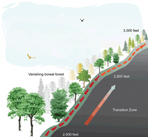 Forest Species Shift Upslope